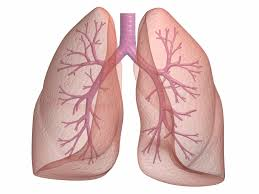 The energy of the Lungs