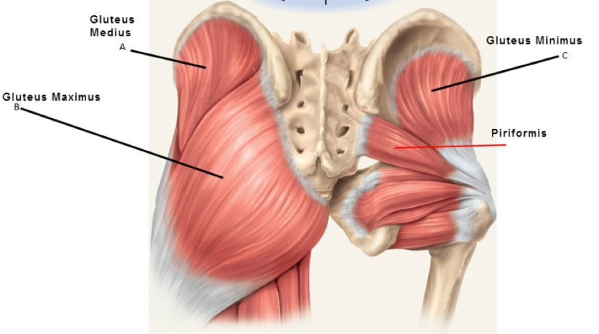 Pain in the Butt? How to treat Piriformis Syndrome with acupuncture and massage.